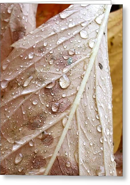 Autumn Rain Greeting Card by Alpha Pup