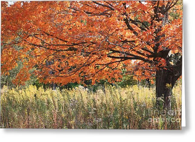 Autumn Red   Greeting Card by Paula Guttilla