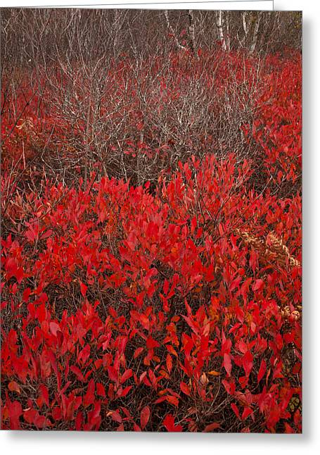 Autumn Red Barrens Greeting Card