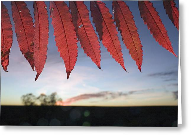 Autumn Red Sumac Leaves Greeting Card by Jim Richardson