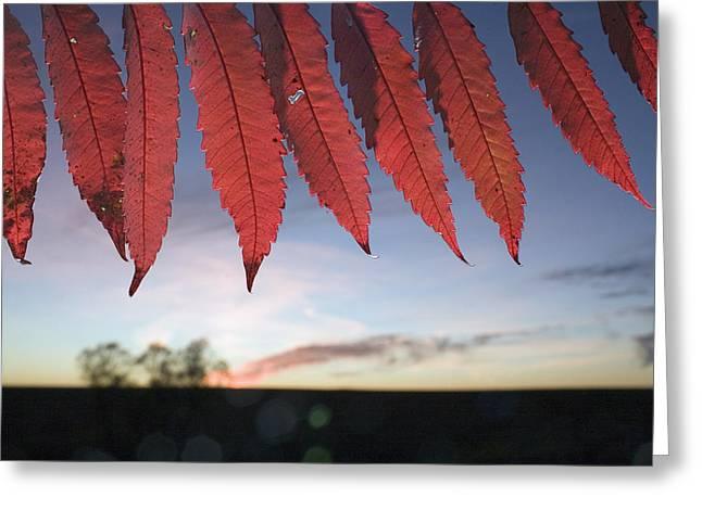 Tallgrass Prairie National Preserve Greeting Cards - Autumn Red Sumac Leaves Greeting Card by Jim Richardson