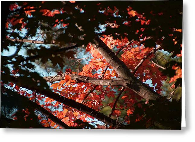 Autumn Red Trees 2015 02 Greeting Card by Thomas Woolworth