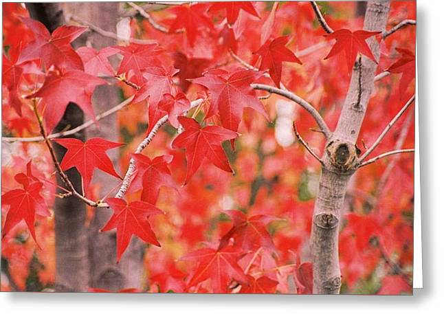 Autumn Reds Greeting Card
