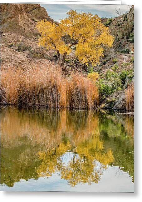 Autumn Reflection At Boyce Thompson Arboretum Greeting Card