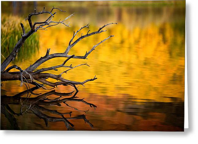 Autumn Reflection Greeting Card by Dan Holmes