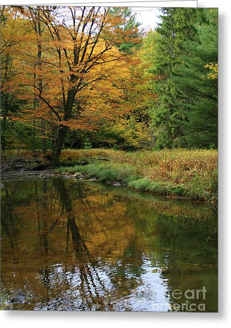 Autumn Reflections Greeting Card by Debra Straub