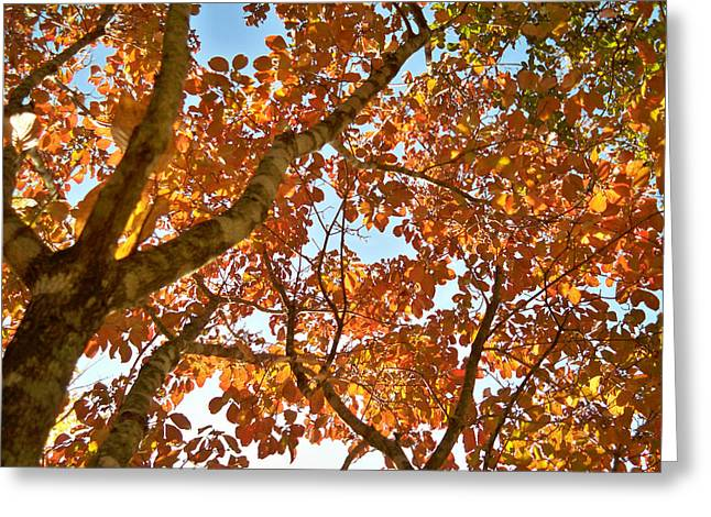 Autumn Remebered Greeting Card by Russ Mullen