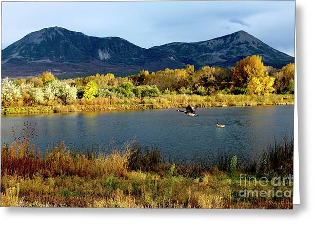 Autumn Rest Stop For Canadian Geese Greeting Card