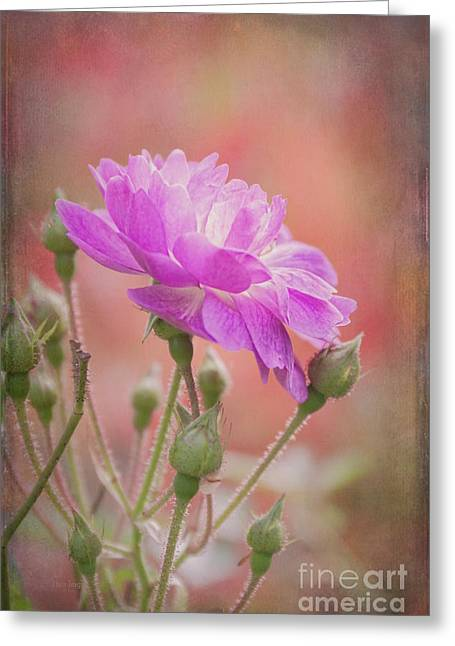 Autumn Rose Greeting Card by Elaine Teague