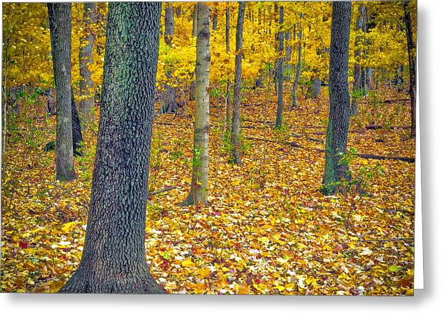 Greeting Card featuring the photograph Autumn by Samuel M Purvis III