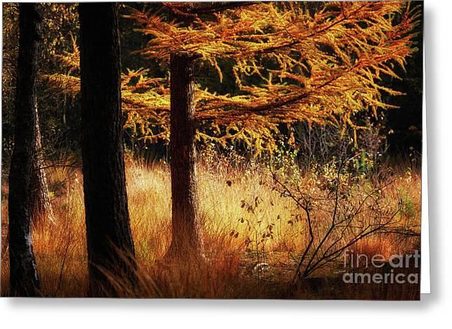 Autumn Scene In A Dark Forest Greeting Card by Nick Biemans