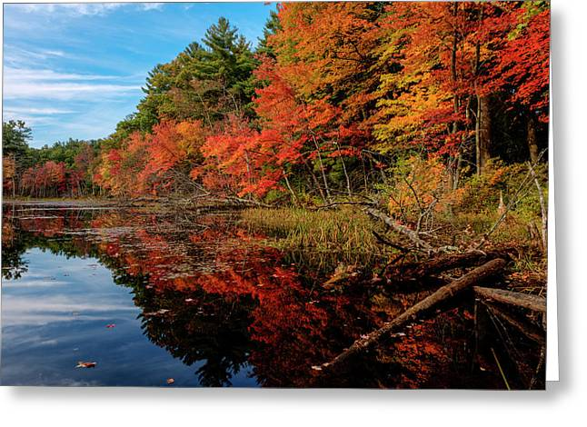 Autumn Scene Greeting Card
