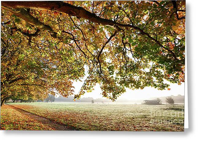 Autumn Scene With Overhanging Trees Greeting Card by Simon Bratt Photography LRPS