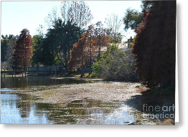 Greeting Card featuring the photograph Autumn Serenity by Carol  Bradley