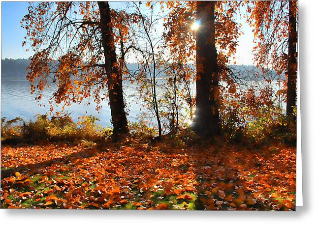 Greeting Card featuring the photograph Autumn. by Sergey and Svetlana Nassyrov