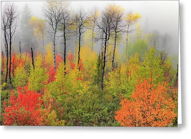 Autumn Shades Greeting Card