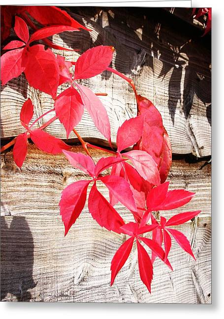 Autumn Shadows Greeting Card by Lucia Del