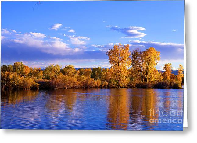 Autumn Shimmering Greeting Card by Barbara Schultheis