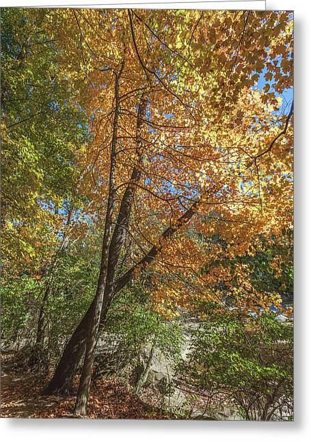 Greeting Card featuring the photograph Autumn Show On The River by Lon Dittrick