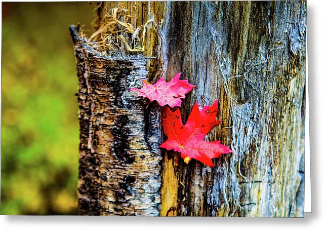 Autumn Silence Greeting Card