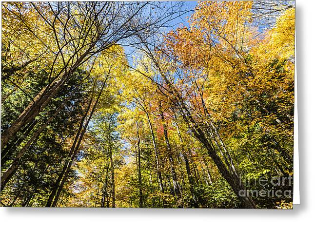 Greeting Card featuring the photograph Autumn Skies by Anthony Baatz