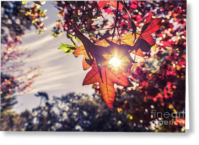 Greeting Card featuring the photograph Autumn Sky And Colorful Leaves In Fall Season With Sun Shine On  by Jingjits Photography