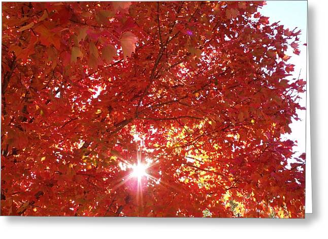 Autumn Sky IIi Greeting Card by Anna Villarreal Garbis