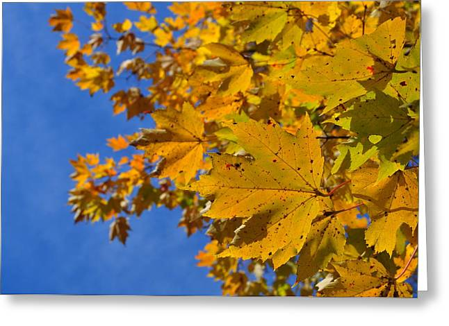 Autumn Sky Greeting Card by JAMART Photography