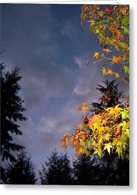 Autumn Sky Greeting Card by Ken Day