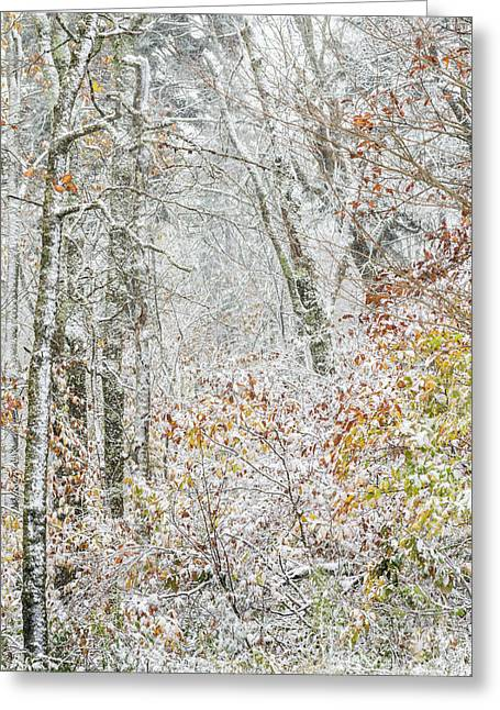 Autumn Snow Cranberry Wilderness Greeting Card