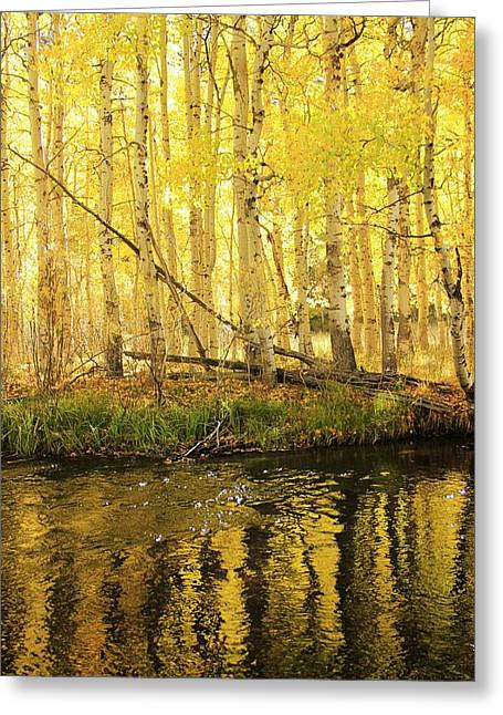 Autumn Soft Light In Stream Greeting Card