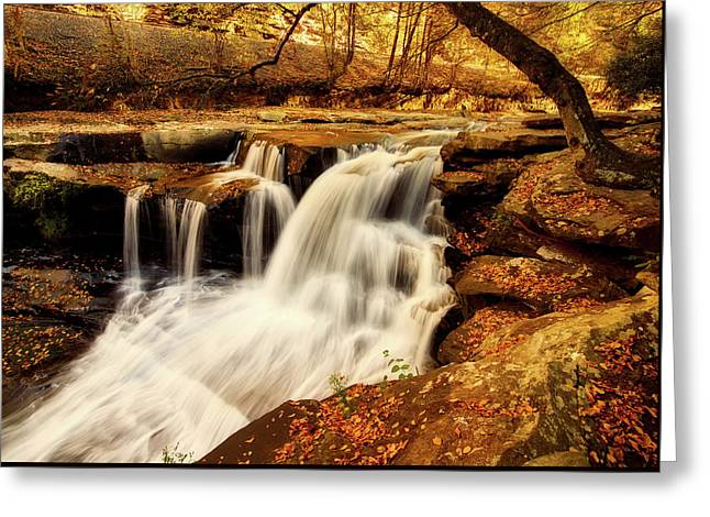 Autumn Solitude Greeting Card by L O C