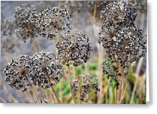 Autumn Spirals Greeting Card by Josie Duff