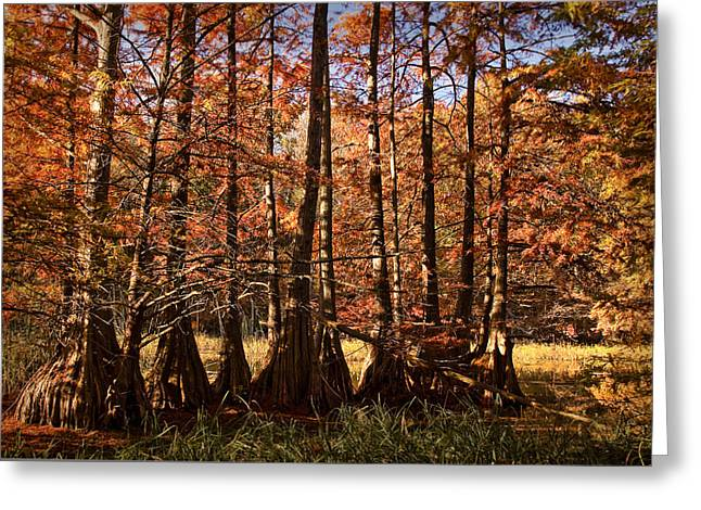 Greeting Card featuring the photograph Autumn Splendor At Lake Murray by Tamyra Ayles