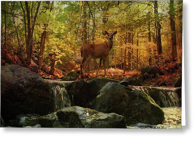 Autumn Splendor Greeting Card by Kathleen Holley
