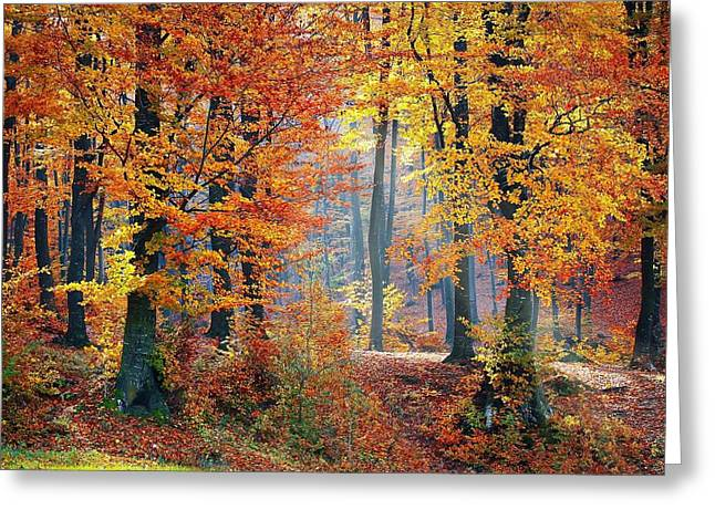 Autumn Splendour Greeting Card