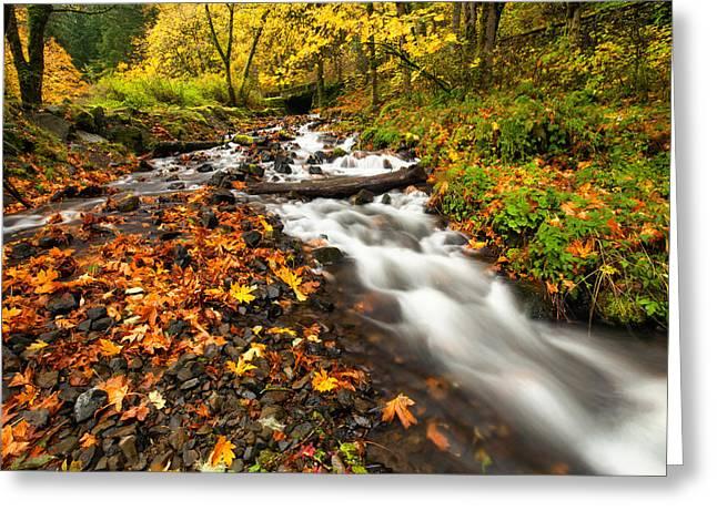 Autumn Split Greeting Card by Mike  Dawson