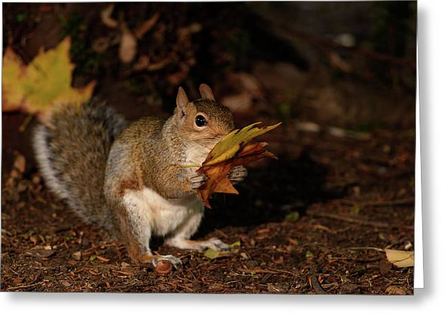 Autumn Squirrel Greeting Card