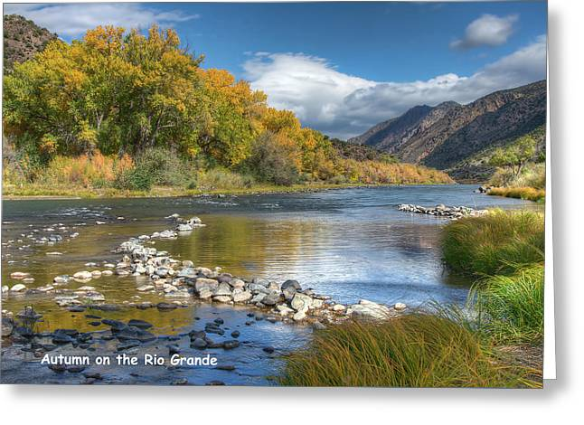 Greeting Card featuring the photograph Autumn Stance Card by Britt Runyon