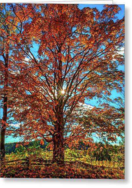 Autumn Star- Paint Greeting Card by Steve Harrington
