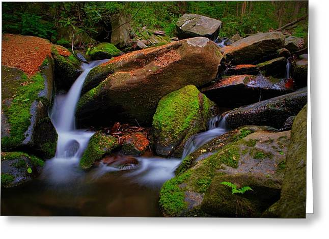 Autumn Stream Greeting Card by Dennis Nelson