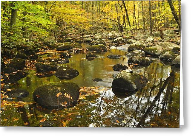 Autumn Stream Reflections Greeting Card by Stephen  Vecchiotti