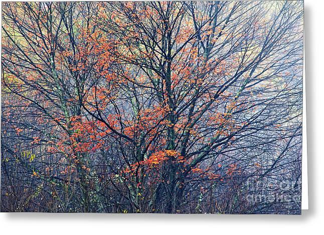 Autumn Sugar Maple In Fog Greeting Card by Thomas R Fletcher