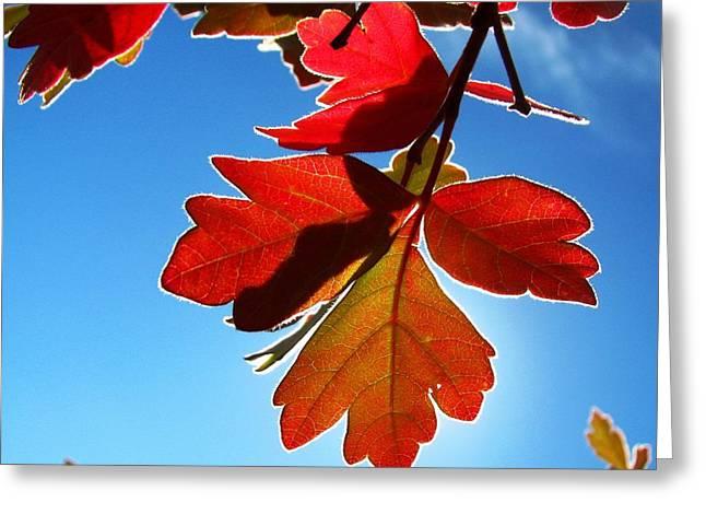 Autumn Sumac Greeting Card