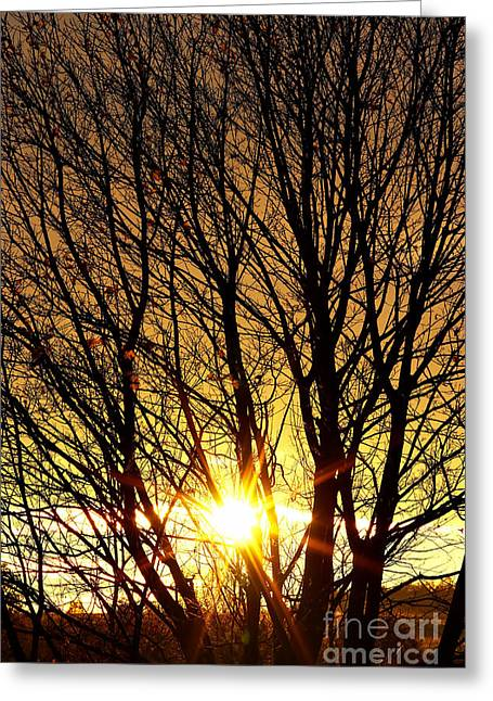 Autumn Sun Behind Branches Of Bare Tree Greeting Card by Michal Boubin
