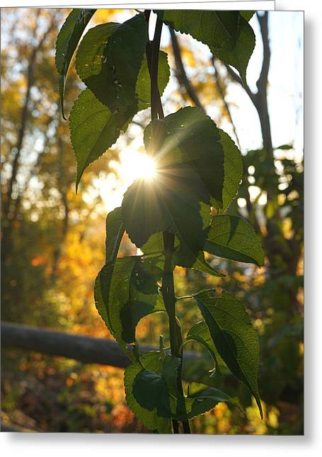 Autumn Sun Breaking Through The Leaves Greeting Card by Lilia D