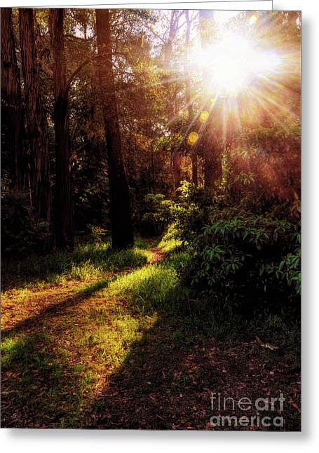 Greeting Card featuring the photograph Autumn Sunburst And Shadows By Kaye Menner by Kaye Menner
