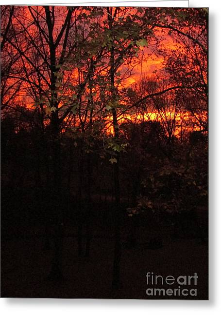 Autumn Sunset Greeting Card by Nancy Rucker