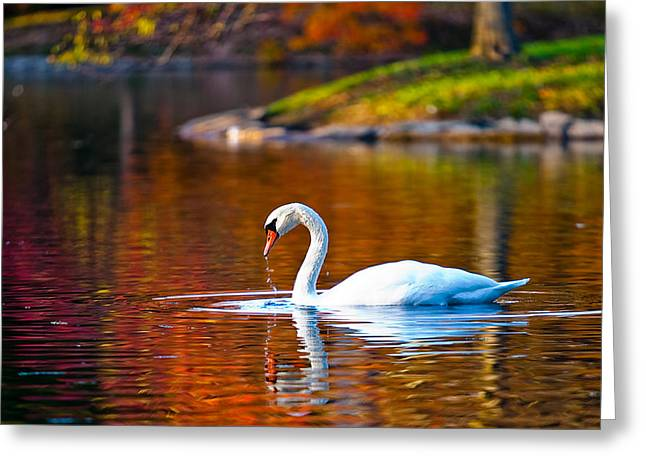 Autumn Swan Lake Greeting Card