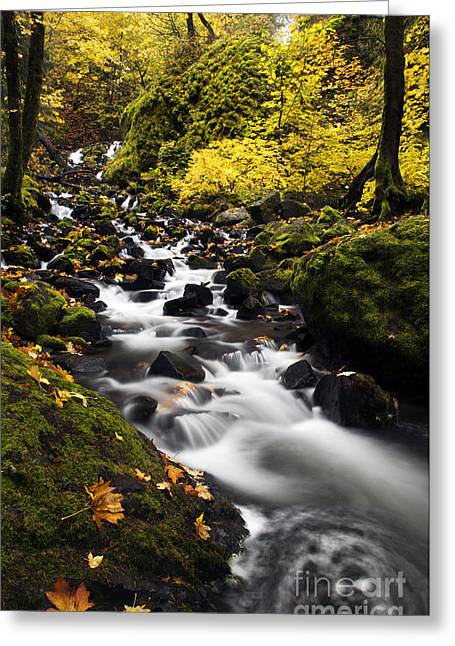 Autumn Swirl Greeting Card by Mike  Dawson